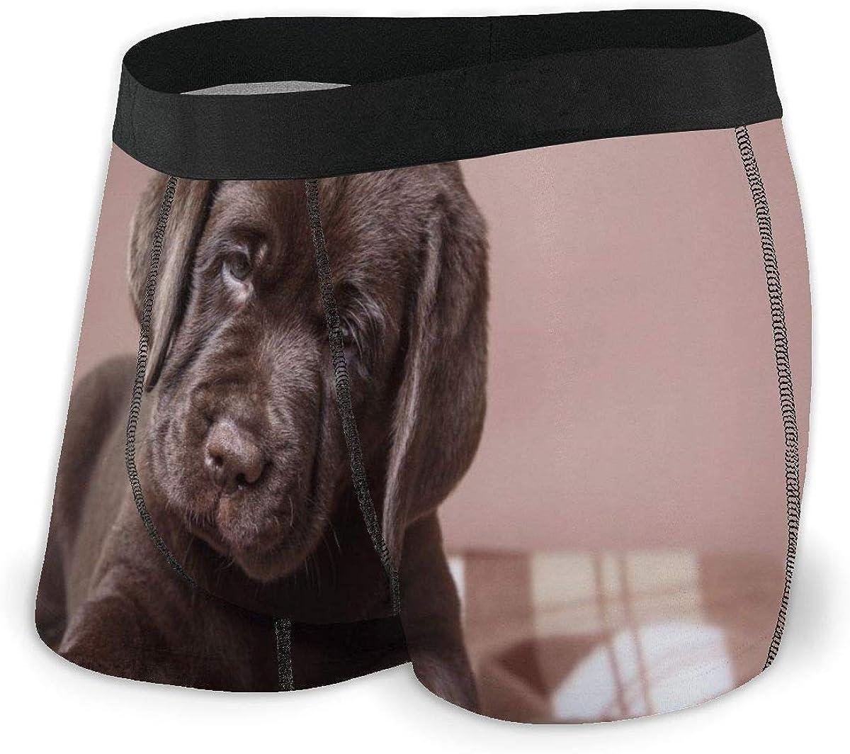 Randolph Wordsworth Mens Boxer Briefs Marvellous Brown Labrador Dog Puppy Boys Trunks Underwear Short Leg Breathable Man