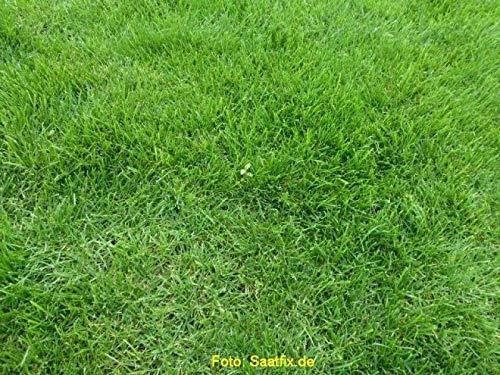 Grassamen Rasensamen Gerbrauchsrasen für Trockenlagen RSM 2.2.2, 1kg für 25m²