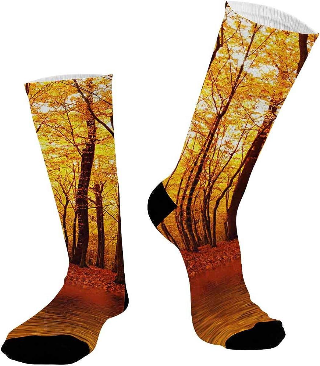 INTERESTPRINT Unisex Outdoor Sports Athletic Hiking Socks Autumn Forest Nature