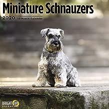 2020 Miniature Schnauzers 16 Month 12 x 12 Wall Calendar by Bright Day Calendars