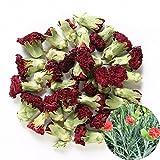 TooGet Fleurs Naturelles D'oeillet Parfumées Fleurs Organiques de Dianthus Séchées en Gros, Catégorie Supérieure - 115g