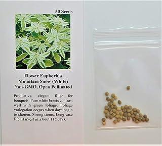 David's Garden Seeds Flower Euphorbia Mountain Snow 3111 (White) 50 Non-GMO, Open Pollinated Seeds