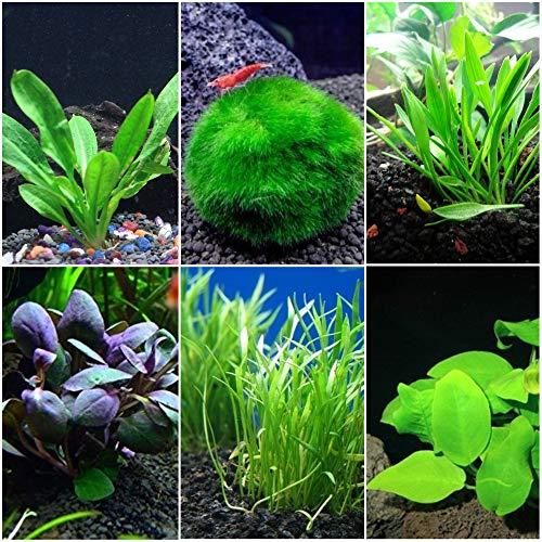 Nano Aquarium Plant Bundle for Small Aquariums - 1-5 Gallon Aquariums