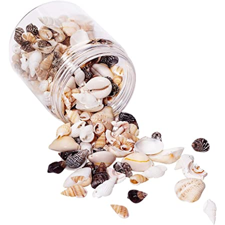 PandaHall Elite - Lot de 1 Boîte Multi-Style Coquillages Spirales Conques Naturels Perles en Coquilles pour Fabrication des Bricolages Bijoux,