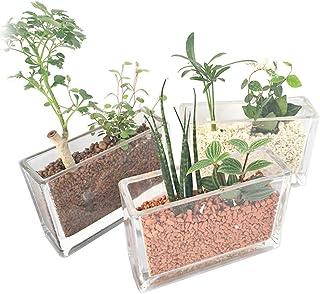 ミニ 観葉植物 レクタングル (横長) 2種寄せ植え おまかせ3鉢セット