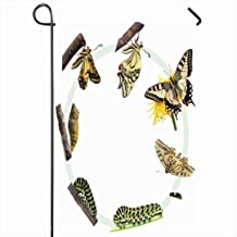 Ahawoso Outdoor Garden Flag 12x18 Inches Green Caterpillar Life Cycle Swallowtail Butterfly Animals Wildlife Nature Metamorphosis Evolution Seasonal Home Decor Welcome House Yard Banner Sign Flags