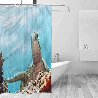 GloriaJohnson Turtle Hotel Fabric Shower Curtain Caribbean Underwater Scene Suitable for Bathroom W72 x L78 Inch