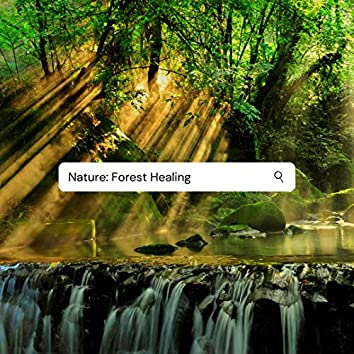 Nature: Forest Healing