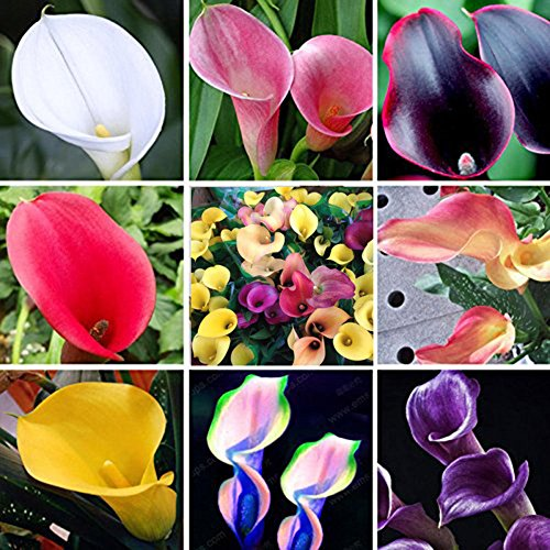 Open Pollinated Seeds LOadSEcrs Garden 100Pcs Rare Orchid Seeds Non-GMO Ornamental Plants Yard Office Decoration Yellow Rare Orchid Seeds
