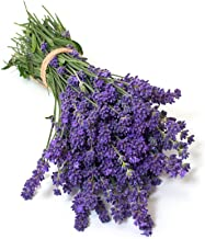 english violet seeds