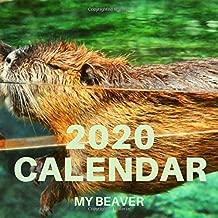 2020 CALENDAR MY BEAVER: MY BEAVER 2020 CALENDAR WITH SPACE FOR DAILY HIGHLIGHTS