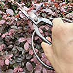 "gonicc Professional 7.3"" Bonsai Scissors(GPPS-1012), for Arranging Flowers, Trimming Plants, for Grow Room or Gardening, Bonsai Tools. Garden Scissors Loppers. 10 Quality Blades - Quality blade made of high carbon steel. Even through heavy use, it will also stay sharp. Ideal For Bonsai Pruning - The Thiner Blades are excellent for floral arrangements or gaining access to narrow openings. Our precision-ground blade edges ensure accuracy and are great for bonsai plants. Comfortable And Easy To Use - Ergonomically designed, handles are strong, lightweight, and comfortable. Because less of spring, without resistance on your hand, you can trim for long periods of time without cramping or joint stiffness. Ideal for those with limited dexterity."