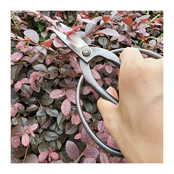 "gonicc Professional 7.3"" Bonsai Scissors(GPPS-1012), for Arranging Flowers, Trimming Plants, for Grow Room or Gardening, Bonsai Tools. Garden Scissors Loppers. 4 Quality Blades - Quality blade made of high carbon steel. Even through heavy use, it will also stay sharp. Ideal For Bonsai Pruning - The Thiner Blades are excellent for floral arrangements or gaining access to narrow openings. Our precision-ground blade edges ensure accuracy and are great for bonsai plants. Comfortable And Easy To Use - Ergonomically designed, handles are strong, lightweight, and comfortable. Because less of spring, without resistance on your hand, you can trim for long periods of time without cramping or joint stiffness. Ideal for those with limited dexterity."