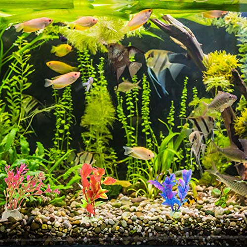 DIGIFLEX 10 x verschiedene Aquariumpflanzen Aquarien - 2