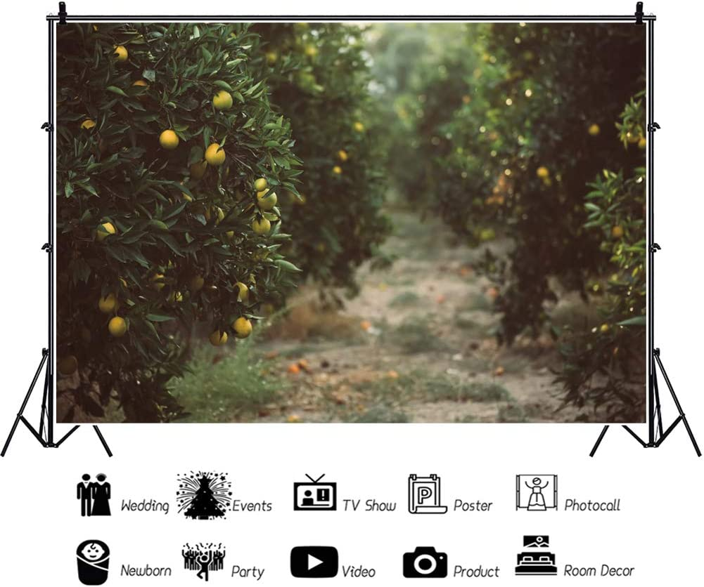 OERJU 12x10ft Orchard Backdrop Bokeh Green Leaves Fruits Photography Background for Photoshoot Kids Boys Girls Adults Artistic Portrait Photo Studio Props Vlog Shooting Video Making Vinyl Wallpaper