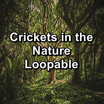 Crickets in the Nature Loopable