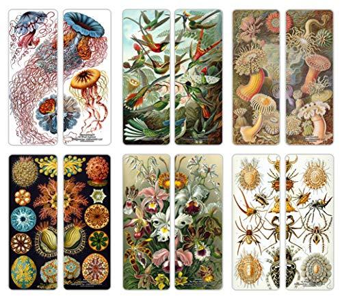 Creanoso Ernst Haeckel Bookmarks Cards Series 1 (12-Pack) - Ecology Biological Illustrations Art Science - Discomedusae 8 Trochilidae Actiniae Ascidiae Orchidae Arachnida