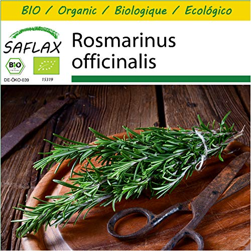 SAFLAX - Kit de culture - BIO - Romarin - 40 graines - Avec mini-serre, substrat de culture et 2 pots - Rosmarinus officinalis