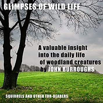 Glimpses of Wild Life (Unabridged), a valuable insight into the daily life of woodland creatures, by John Burroughs