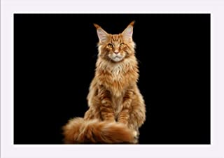 Sponsored Ad - Beautiful Red Maine Coon Cat Sitting with Large Ears & Furry Tail on Black Background 9020779 (18x12 Giclee...