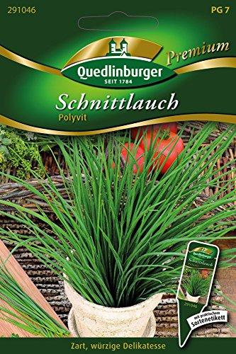 Schnittlauch Polyvit von Quedlinburger Saatgut
