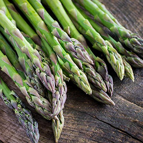 Asparagus Vegetable Garden Seeds - Mary Washington - 1 Lb Bulk - Non-GMO, Heirloom, Gardening Seed