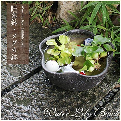 信楽焼 10号黄釉ハケメ花型すいれん 睡蓮鉢 スイレン鉢 金魚鉢 水鉢 陶器 su-0150