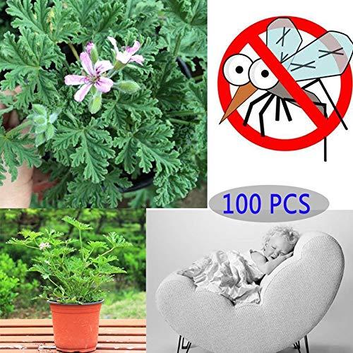 AchidistviQ 100 Piezas De Semillas De Plantas Repelentes De Mosquitos Decoración De Plantas Ornamentales De Jardín Sin Sabor (Semillas De Citronela) Semillas de Mozzie Buster 100 Piezas