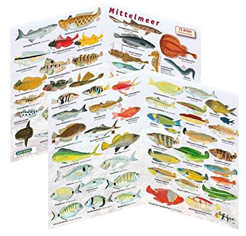 Fischfaltblatt Fischbestimmungskarte Faltblatt zur Fischbestimmung Mittelmeer, Süßwasser, Rotes Meer (Mittelmeer)