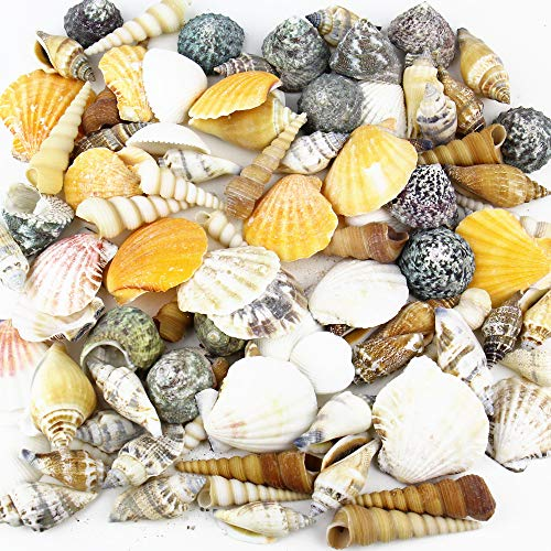 Seashell Vase Fillers