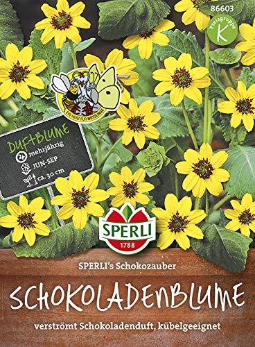 Sperli-Samen Schokoladenblume SPERLI's Schokozauber