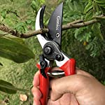 "gonicc 8"" Professional Sharp Bypass Pruning Shears (GPPS-1002), Tree Trimmers Secateurs,Hand Pruner, Garden Shears,Clippers for The Garden. 14 Drop forged body and handles, quality blade made of high carbon steel with Ultra-fine Polishing Technology. Ideal for deadheading, trimming, shaping on tree, roses, annuals, vegetable, flower gardens, bonsai and other plants. Ergonomically designed non-slip handles are strong,lightweight,and comfortable."