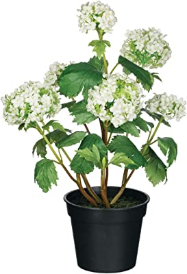 Sullivans Rose Guelder Potted