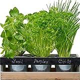 [PER NEOFITI ED ESPERTI] - Il kit giardinaggio include tre vasi in una fioriera in legno con gocciolatoio - completa di semi e terriccio, per avere tutto il necessario per coltivare direttamente in casa tua [PERSONALIZZABILE] - Capita di perdere di v...