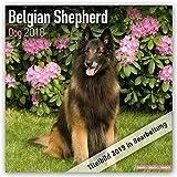 Belgian Shepherd Dog - Belgischer Schäferhund 2021: Original Avonside-Kalender [Mehrsprachig] [Kalender] (Wall-Kalender)