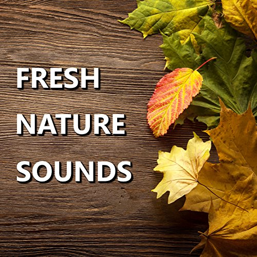 Bright Outdoor Nature Sounds