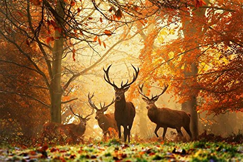 Mobicus 5D DIY Diamond Painting,by Number Kits Crafts & Sewing Cross Stitch,Wall Stickers for Living Room Decoration,Deer(12X18inch/30X45CM)