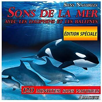 Sons de la mer avec les dauphins et les baleines: sons naturels: édition spéciale