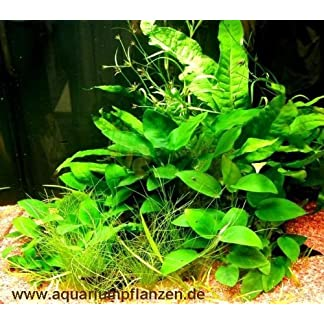 Barschfestes Wasserpflanzensortiment