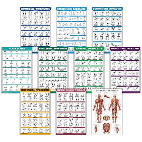 10 Pack - Exercise Workout Poster Set - Dumbbell, Suspension, Kettlebell, Resistance Bands, Stretching, Bodyweight, Barbell, Yoga Poses, Exercise Ball, Muscular System Chart (Laminated, 18' x 27')