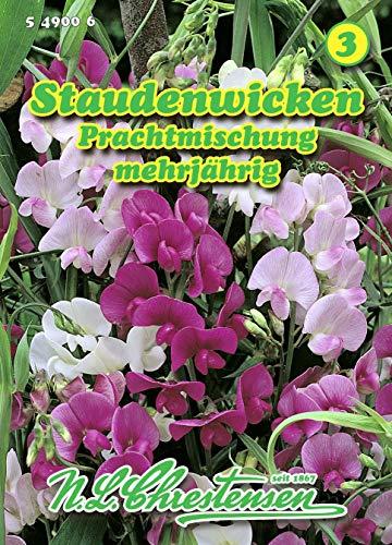 Lathyrus latiflolius, Staudenwicken, Prachtmischung mehrjährig N.L.Chrestensen