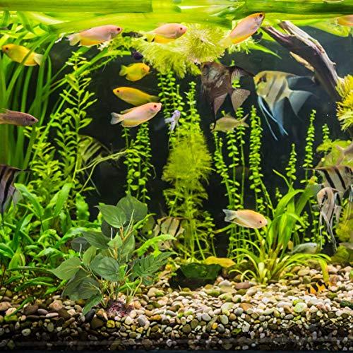 DIGIFLEX 20 cm künstliche Aquariumpflanze, grüne echt aussehende Aquarium-Zierblätter, Plastikpflanzen für Aquarien - 2