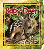 Baby Deer (It's Fun to Learn about Baby Animals (Paperback))