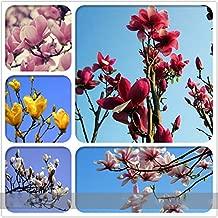 ADB Inc 6 Types Red Yellow Pink White Yulan Magnolia Denudata Fragrant Lilytree 10 Seeds (Magnolia 01 Mix)