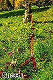 Schleppleine 5m – Neon-Orange – zugfeste, schmutz- und wasserabweisende Hundeleine mit zwei Karabinern - 8