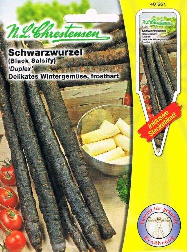 Schwarzwurzel \'Duplex\' delikates Wintergemüse, frosthart ( mit Stecketikett)