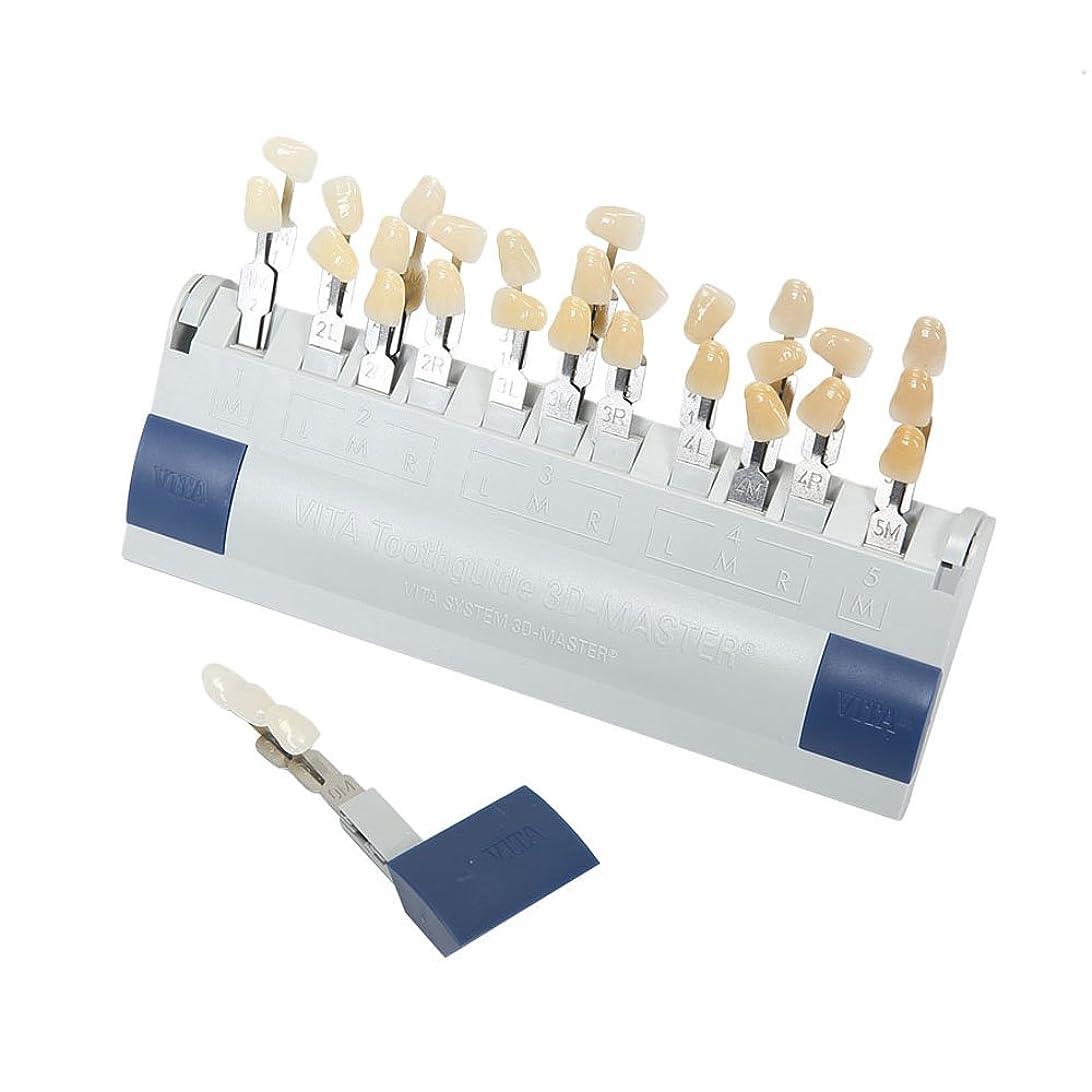 二層代替案分岐するVITA 歯科ホワイトニング シェードガイド 29色 3D 歯列模型ボード