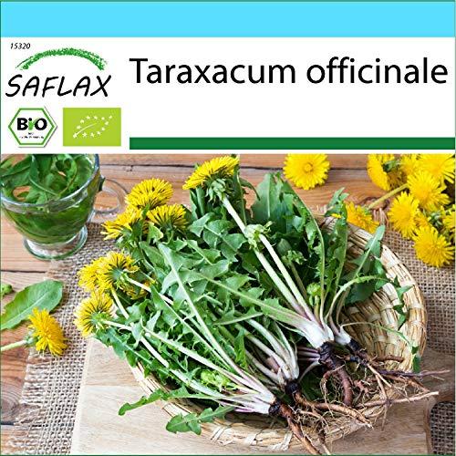 SAFLAX - Ecológico - Diente de león - 400 semillas - Tarax