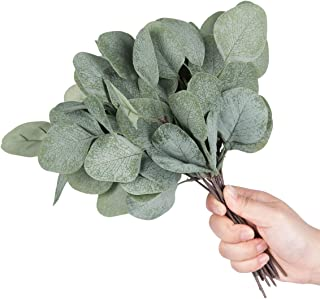 Best silver dollar greenery Reviews