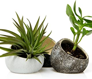 Chive - Set of 3 Koski, Small Round Ceramic Air Plant Container, Succulent and Cactus Mini Pot, Tillandsia/Bromeliad Display, Airplant Holder for Indoor Garden and Home Decor (White, Brown, Black)